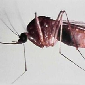 2012 was second worst year for West Nile Virus