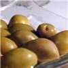 Olive oil diet may increase chances of breast cancer recovery