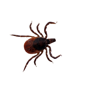 Lyme disease rates up in the northern U.S. states
