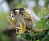 Monkey vaccine study may advance HIV vaccine research
