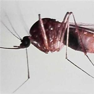 Scientists develop a more effective malaria test