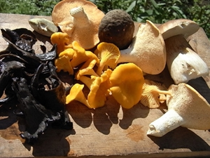 Mushrooms may be just as effective as vitamin D supplements