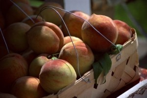 Compound in peaches may support metabolic health