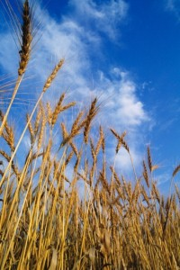 Gluten-free diet benefits patients suspected of celiac disease