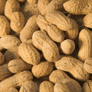 Researchers find potential cause of food allergies